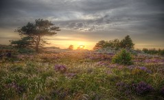 The beauty of late Summer (blavandmaster) Tags: august 6d himlen hede landskabet landscape landschaft ciel solnedgang jütland vesterhavet zand zomer danmark light denemarken beautiful summer countryside pijnboom blavand dänemark danish 24105 photomatix bruyère zonsondergang perfect handheld 2017 kleuren heidekraut hdr nuages atardecer sky tree denmark sommer lys sonnenuntergang colours hemel garrigue himmel heide christiankortum interesting lumière blåvand awesome clouds jylland fyr processing sunset 37millions coucherdesoleil pine skyer pinède erica sand lyng eos6d wolken 37000000 paysage heather canon