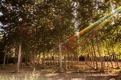 Raggi trasversali (Gianni Armano) Tags: raggi trasversali colline monferrato alessandria piemonte italia foto gianni armano photo flickr