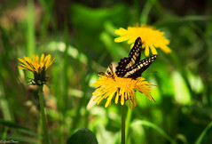flor , mariposa y avispa (guilletho) Tags: flowers mariposa butterfly nature escenery garden wasp avispa insect insectos mexico wespe canon