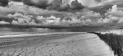 some patchy rain .... (robvanderwaal) Tags: bui sand netherlands mono wolk bw zwartwit lucht nederland beach blackandwhite maasvlakte zee clouds shower buien robvanderwaalphotographycom 2017 cloud monochrome zw showers zand regen sky sea rvdwaal rain wolken strand noordzee northsea seascape