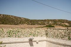 vacanze sarde_-59 (Trittonando) Tags: asinara sardegna sardinha asinello bianco carcere