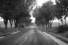 IMG_4261 (echoey13) Tags: hungary 2017 tree trees road blackandwhite bw monochrome