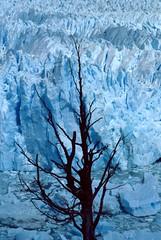 ghiaccio secco (albertotenconi) Tags: ghiacciaio perito moreno argentina