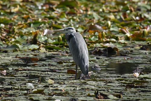Windsor Great Park 24 September 2017 025