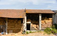 _DSC0635 (carlo_gra) Tags: nikon 7500 gavi nature hills piemonte farm cats wine vino tractor hay meadow