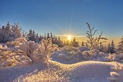 Puderzucker (Benni's Fotobude) Tags: eingeschneit kalt eis cold ice winter puderzucker schnee frost frosty sonnenuntergang wald schwarzwald wetter hornisgrinde hochschwarzwald b500 schwarzwaldhochstrase schliffkopf ruhestein seebach snow