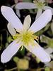 (Cliff Michaels) Tags: iphone iphone6 photoshop pse9 flowers kroger colors flora petals