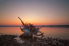 At the water's edge (mclcbooks) Tags: lake landscape log driftwood branch stump sunrise dawn daybreak morning longexposure le chatfieldstatepark lakechatfield colorado summer