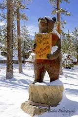 big bear -1 (S.Sinatraphotography@att.net) Tags: wildturkey ssinatrasmugmugcom ssinatrasmugmugcomuskpioneerchapel bigbearcity bigbearlakecabigbearssinatrasmugmugcom bigbearlakeca bigbearlake boulderbay pinetrees ssinatraphotogrpahy sanberdardinocountyca sanbernardinomountains sinatra sinatrasvillabigbearlake snow snowsummit welcometobigbear sinatrasvilla1 skiing usk pioneer chapel
