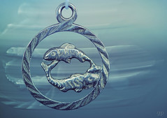 My Zodiac:  The Fish - Fisch - Pisces - HMM (_gp_) Tags: makro zodiac macromondays
