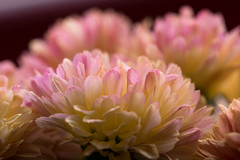 zarte Blütenträume 03 (p.schmal) Tags: hamburg farmsenberne blütenmakros
