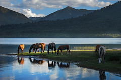 calma (Luis_Garriga) Tags: caballos lago montañas nubes cordillera andes ñorquinco reflejos pasisaje neuquen pehuenia
