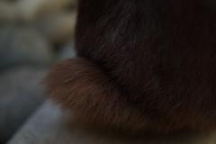 Soft Rabbit (Bnylvr) Tags: rabbit fur brown bunny nature pet outdoors twix love