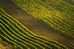 Land of many vineyards (Pavel Cervenka Photographer) Tags: vineyard landscape abstract lines land velké bílovice pálava southmoravia light simple minimal pavel cervenka czech republic canon ef55250 path nature summer