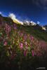'Valley of Flowers - A Dream' (Bharat Baswani) Tags: valleyofflowers vof valley flowers landscape bhyundar uttarakhand joshimath nationalpark national park mountains himalayas blue sky himalayan balsams green pink dream dreamy surreal ethereal paradise shangrila utopia magical