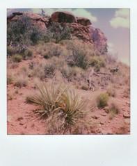 sedona + SX70 (EllenJo) Tags: bellrockpathways trail villageofoakcreek sedona az arizona coconinonationalforest august14 summerinaz redrockcountry hike dogwalk summer ellenjo 2017 august