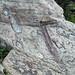 Concretions & quartz vein in sandstone (Thunderhead Sandstone, Neoproterozoic; Clingmans Dome, Great Smoky Mountains, North Carolina, USA) 3
