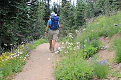 Hiker Mt. Rainier National Park (Bella Lisa) Tags: mountrainiernationalpark sourdoughmountains washington sunrisevisitorcenter degepeak mtrainier emmonsvista curlyeverlasting wildflowers wilderness nationalpark washingtonstate sunsetpoint hiking emmonsglacierevergreens pines pinetrees