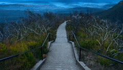 Cahill's Lookout (benpearse) Tags: cahills lookout katoomba ben pearse landscape photography sunrise august 2017 smoke hazard reduction bushfire burning new growth post fires paths