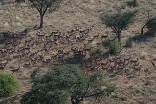 Namibia Luxury Hunting Safari 61