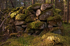 Abandoned farms II (Metalhund) Tags: sweden skåne abandoned forladt skov natur mos moss yashica35mmf28 manual manuallenses manualfokus a7