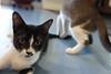 Office Cat (sleepercreeper) Tags: hawaii flight tour molokai lanai maui oahu