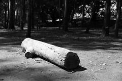 The Log (superzookeeper) Tags: 5dmk4 5dmkiv hk hongkong canoneos5dmarkiv ef2470mmf28liiusm namsangwai wood forest monochrome blackandwhite log eos yuenlong bnw digital favorites