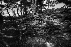 roots (bjdewagenaar) Tags: blackandwhite blackwhite bw mono monochrome sony sonya58 sonyalpha sonyphotographer sigma wideangle ultrawideangle ultrawide 1020mm trees nature lightroom raw