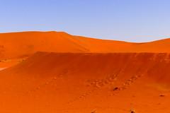 P1020928 (Seb_Jan) Tags: namibie namibia afrique africa afrika summer 2017 road trip roadtrip travel adventure holiday nature explore lumix wildlife safari picoftheday photooftheday dune desert naukluft sossusvlei red sand wonder merveille sesriem