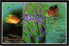 postcard - from Janbonivic, Philippines (Jassy-50) Tags: postcard postcrossing philippines tabbatahareef pakawan fish coral multiview underwater water animal unescoworldheritagesite unescoworldheritage unesco worldheritagesite worldheritage whs