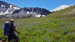 Berkeley Park (Dan Nevill) Tags: wonderland rainier wonderlandtrail mtrainier mountrainier nationalpark backpacking camping trail wilderness alex kieth hiking wildflowers washington pacificnorthwest pnw