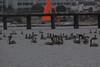 IMG_9783 (armadil) Tags: mavericks beach beaches californiabeaches boat sailboat bird birds pelicans pelican harbor