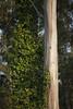 Marin (Norscout) Tags: 5d muir slideranch marin headlands woods muirwoods muirbeach ocean pacific california norcal canon 5dmkii sunset