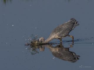 Splish-Splash....