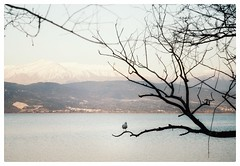 * (PattyK.) Tags: ioannina giannena giannina epirus ipiros balkans hellas ellada europeanunion europe greece grecia griechenland lake pamvotida lakepamvotida ioanninalake lakeside lakefront waterfront bythelake water ιωάννινα γιάννενα γιάννινα ηπειροσ βαλκάνια ελλάδα ευρώπη ηπόλημου λίμνη παμβώτιδα λίμνηπαμβώτιδα λίμνηιωαννίνων παραλίμνιο μώλοσ δίπλαστηλίμνη νερό bird landscape landscapephotography nikond3100 gull πουλί δέντρο τοπίο