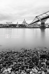 Low Tide, Bankside, London, UK (davidgutierrez.co.uk) Tags: london londonphotographer davidgutierrezphotography city blackandwhite nikond810 nikon photography architecture art blackwhite uk urban travel people property photographer monochrome bw black white blackandwhitephotography arts unitedkingdom afsnikkor1424mmf28ged 1424mm 伦敦 londyn ロンドン 런던 лондон londres londra england europe beautiful cityscape davidgutierrez capital structure britain greatbritain centrallondon ultrawideangle d810 building stpaulscathedral river riverthames millenniumbridge rocks greyscale lowtide