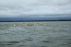 "I Mityng Triathlonowy - Nowe Warpno 2017 (111) • <a style=""font-size:0.8em;"" href=""http://www.flickr.com/photos/158188424@N04/36722705121/"" target=""_blank"">View on Flickr</a>"