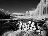 Logs 2017 (kckelleher11) Tags: 2017 720nm cut ep2 forest ir infrared ireland january logs olympus trees down panasonic