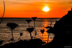 Flowes sunset (joe petruz) Tags: sunset sea orange landscape maritime flowes flower fiori mare background canon eos 650d