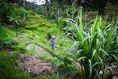 MircK - Rice Terrace Worker (imNOTaPh) Tags: tegalalang ubud bali rice riceterrace worker woman landscape riceterraceworker nikon d3100 mirck travel travelphotography ontheroad roadtrip indonesia green