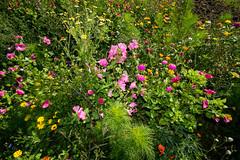 Flower meadow (Markus Branse) Tags: german deutschland wiese blumenwiese meadow flower flowers bunt grün green colour color colorfull blüten bloem