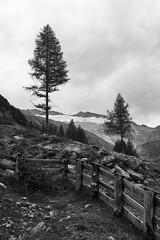 L1012591 (Daniele Pisani) Tags: montagna lago neves brunico alberi paesaggio ghiacciaio