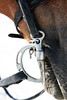 b i t (shana curtis) Tags: equestrian equine horse bit bridle reins photography photo camera