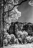 GilaWilderness_infrared-707 (wanderingYew2 (thanks for 3M+ views!)) Tags: 120 6x9 fuji6x9 fujigw690 gilawilderness newmexico r72filter blackandwhite film filmscan infrared infraredfilm mediumformat rolleiinfraredfilm rolleiinfrared400