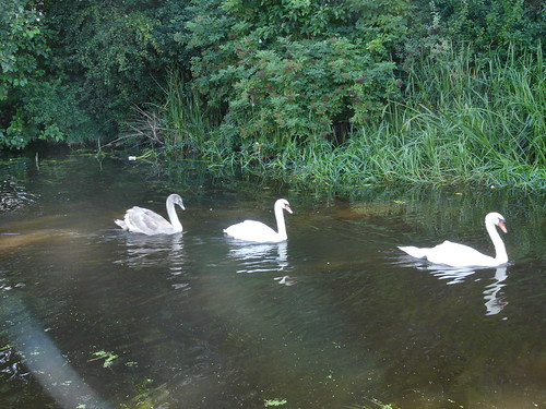 Family Outing, The Union Canal, Wester Hailes