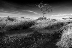 The Desolate Tree (Christian Hacker) Tags: tree blackandwhite mono monochrome bw dark isolated desolate water reflections moor dartmoor nationalpark devon uk england canon50d pebbles stones wilderness remote quite calm streakyclouds gnarly landscape tamron 1750mm gidleigh outdoor hiking north teign river scorhill walk clear late summer sunny contrail weathered gnarled transparent