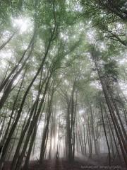 Forest Sky / Baum Kronen (NatureArt by Wolfgang) Tags: wald forest sun sunlight nebel fog mist sunray sunbeam sonnenstrahlen sony xperia xz premium sunrise sonnenaufgang