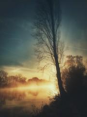 Sonnenaufgang... (hobbit68) Tags: sonnenaufgang sonne frankfurt fluss baum sky himmel clouds nebel sunset