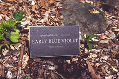 early-blue-violet (FADICH PHOTOGRAPHY) Tags: oly olympia washington fadichphotography 2017 nature park tumwater tumwaterfalls falls plants trees river