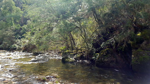 Panorama of the river on the Mt Beauty Gorge walk (5/5)